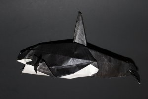 WOSK_115 - ORCA (1)