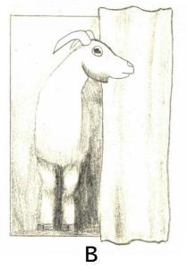 goat B
