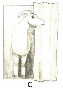 goat C