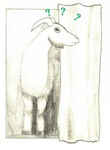 goat mystery