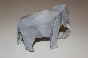 WOSK_203 - ASIATIC ELEPHANT (3)