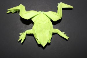 WOSK_210 - TREE FROG (2)