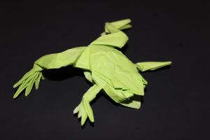 WOSK_210 - TREE FROG (5)