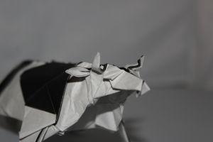 MIYAJIMA - COW (1)