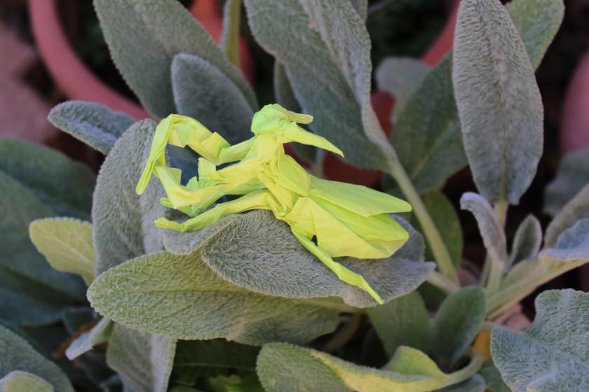 otmcp_057 - praying mantis - kamiya (115)
