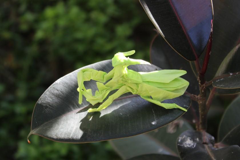 otmcp_057 - praying mantis - kamiya (117)
