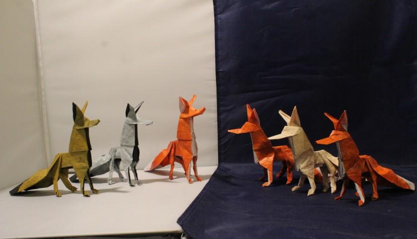 WKO_053 - THE FOX (109)